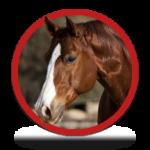 circle_HORSE