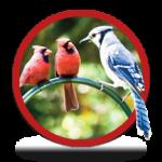 circle_WILD-BIRD2