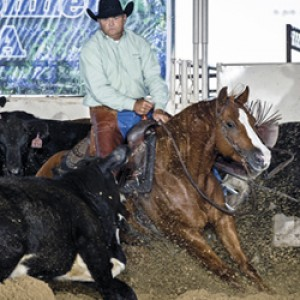 Raymond Shumate's Horses Benefit from Moore Natural Feed