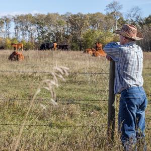 Cattle Management Ideas