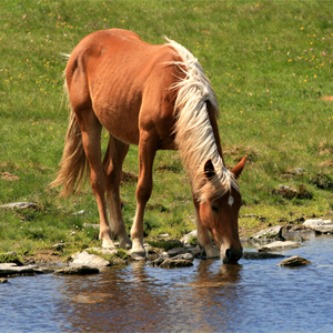 Using Ponds as Water Sources for Horses