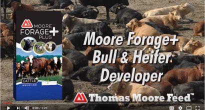 Moore Forage Plus Video