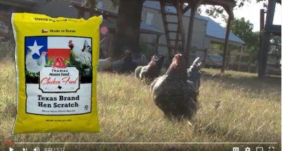 Moore Texas Brand Hen Scratch Video