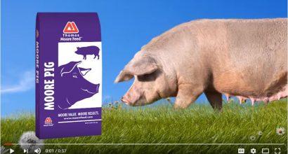 Moore Pig Video