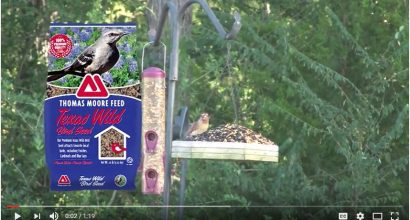 Thomas Moore Feed - Texas Wild Bird Seed Video