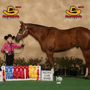 "Savannah Petrosky and Noble Securittee ""Texas"", 2017 & 2018 Texas Quarter Horse Association State Champion Youth Gelding"